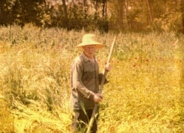 Θερίζοντας τα χωράφια - η φωτογραφία της έμπνευσης